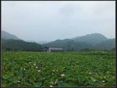 上林荷花 :上林荷花  (5).jpg