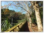 大羅蘭溪步道:大羅蘭溪步道 (8).jpg