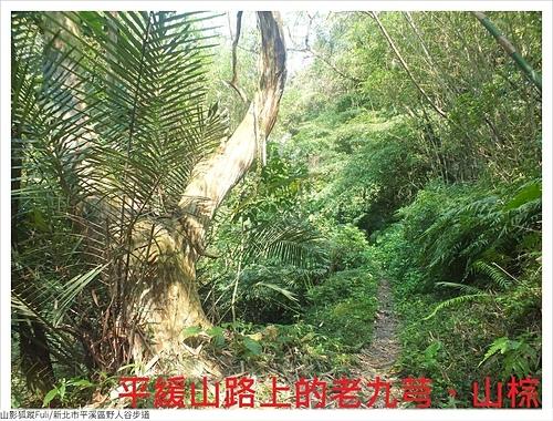 野人谷步道 (9).JPG - 野人谷步道