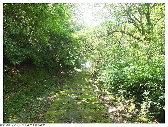 平湖西步道 (89).JPG - 平湖西步道