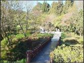 阿里山森林步道:阿里山步道 (13).jpg