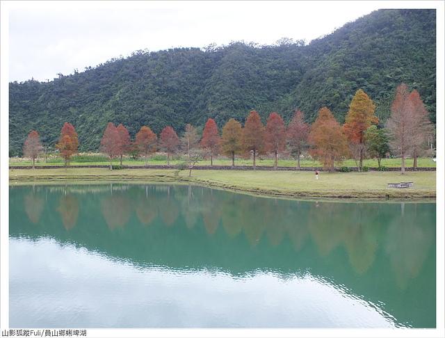 蜊埤湖 (1).JPG - 蜊埤湖落羽松