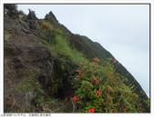 巨齒稜紅星杜鵑花:巨齒稜紅星杜鵑 (13).jpg