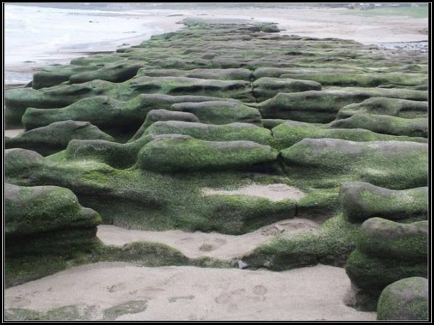 老梅綠石槽 :老梅綠石槽  (5).jpg