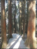 阿里山森林步道:阿里山步道 (16).jpg