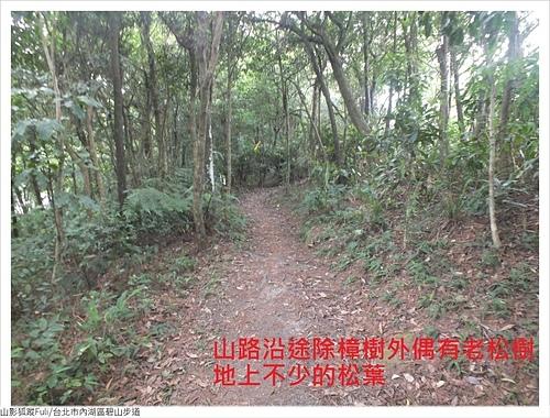 碧山步道 (4).JPG - 碧山步道