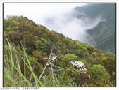 巨齒稜紅星杜鵑花:巨齒稜紅星杜鵑 (47).jpg