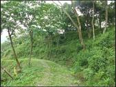 鹿廚坑步道(內環線) :鹿廚坑步道 (9).jpg