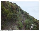 巨齒稜紅星杜鵑花:巨齒稜紅星杜鵑 (63).jpg