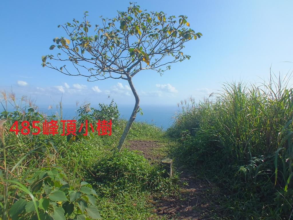 基隆山稜 (1).JPG - 基隆山稜