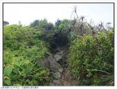 巨齒稜紅星杜鵑花:巨齒稜紅星杜鵑 (17).jpg
