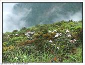 巨齒稜紅星杜鵑花:巨齒稜紅星杜鵑 (64).jpg