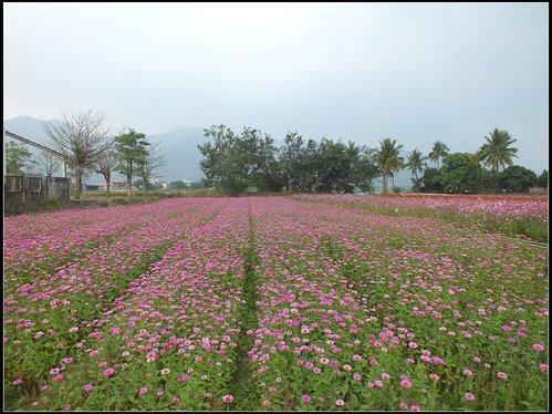 花海、中圳湖 :中圳湖 (5).jpg