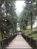 太平山莊、鐵杉林步道、原始森林步道:鐵杉林步道 (6).png