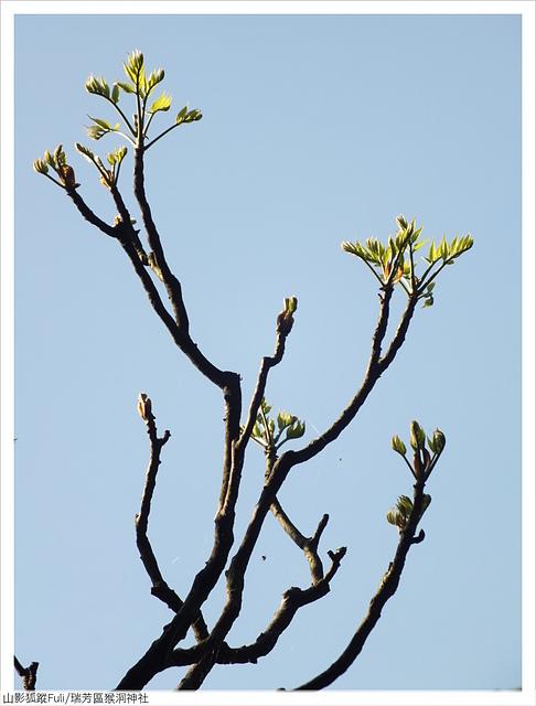 猴洞神社 (56).JPG - 猴洞神社鐘萼木