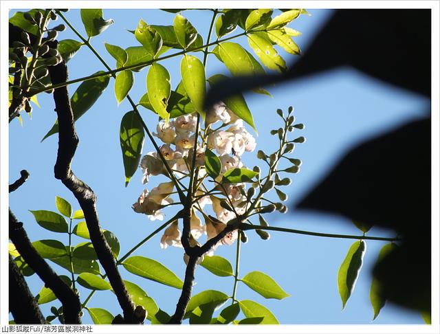 猴洞神社 (59).JPG - 猴洞神社鐘萼木