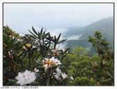 巨齒稜紅星杜鵑花:巨齒稜紅星杜鵑 (92).jpg