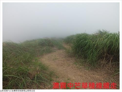 雪山尾稜北段 (80).JPG - 雪山尾稜北段