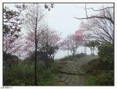 山霧山櫻:山霧櫻花 (53).jpg