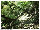 畝畝山/石硿子古道:石硿子古道畝畝山 (19).JPG