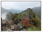 巨齒稜紅星杜鵑花:巨齒稜紅星杜鵑 (102).jpg