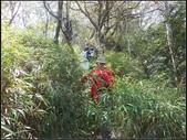 加里山登山步道:加里山 (25).jpg