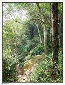 五指山登山步道:五指山登山步道 (48).jpg