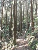 加里山登山步道:加里山 (7).jpg