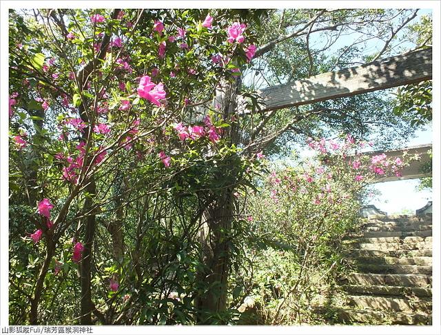 猴洞神社 (31).JPG - 猴洞神社鐘萼木