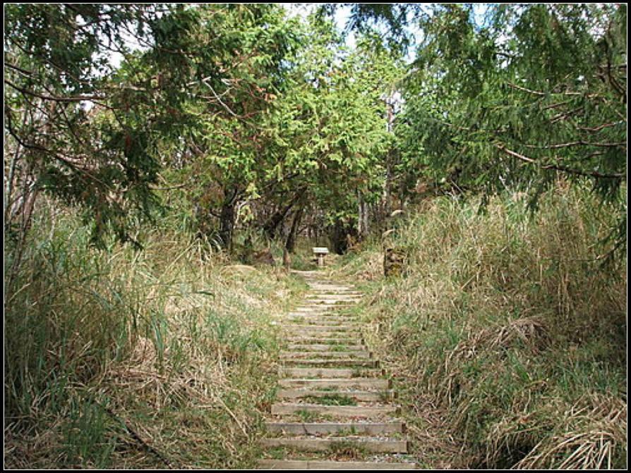 望洋山步道:望洋山步道 (4).jpg