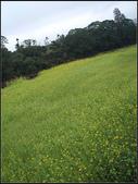 銅鏡山林步道:銅鏡村 (14).jpg