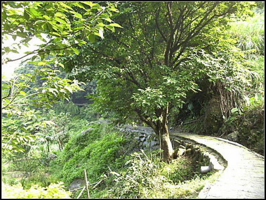 坪頂古圳、大崎頭步道:坪頂古圳 (13).jpg