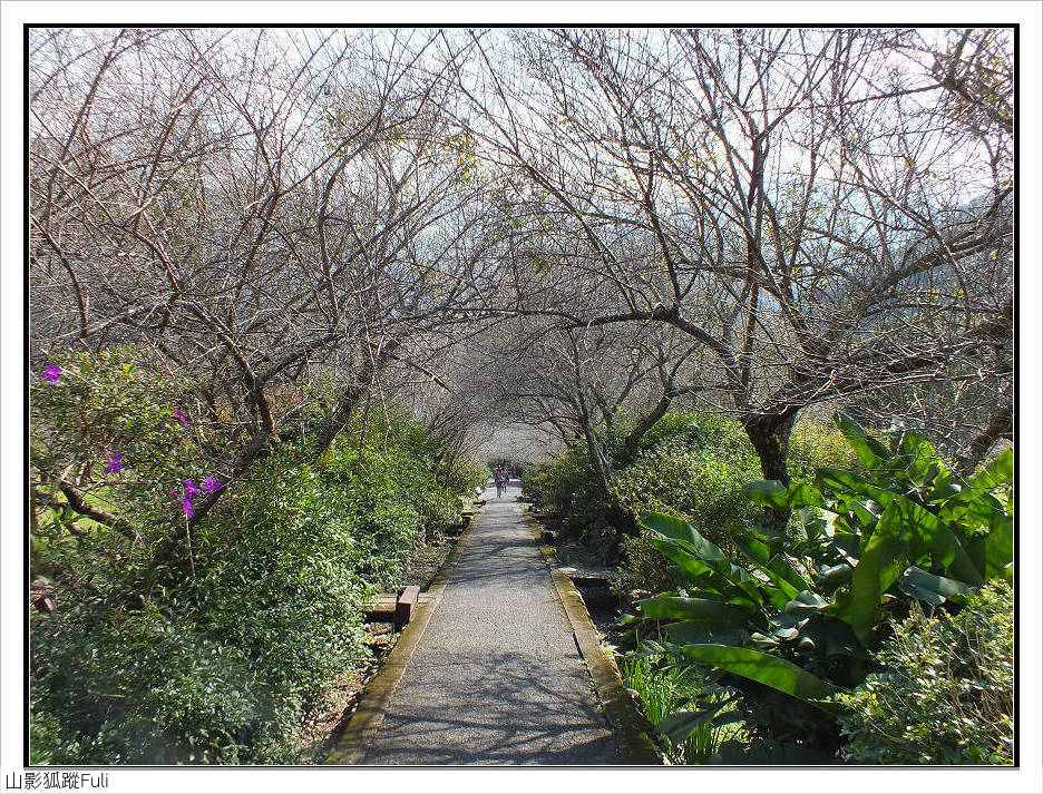 棲蘭森林遊樂區:棲蘭森林遊樂區 (24).jpg