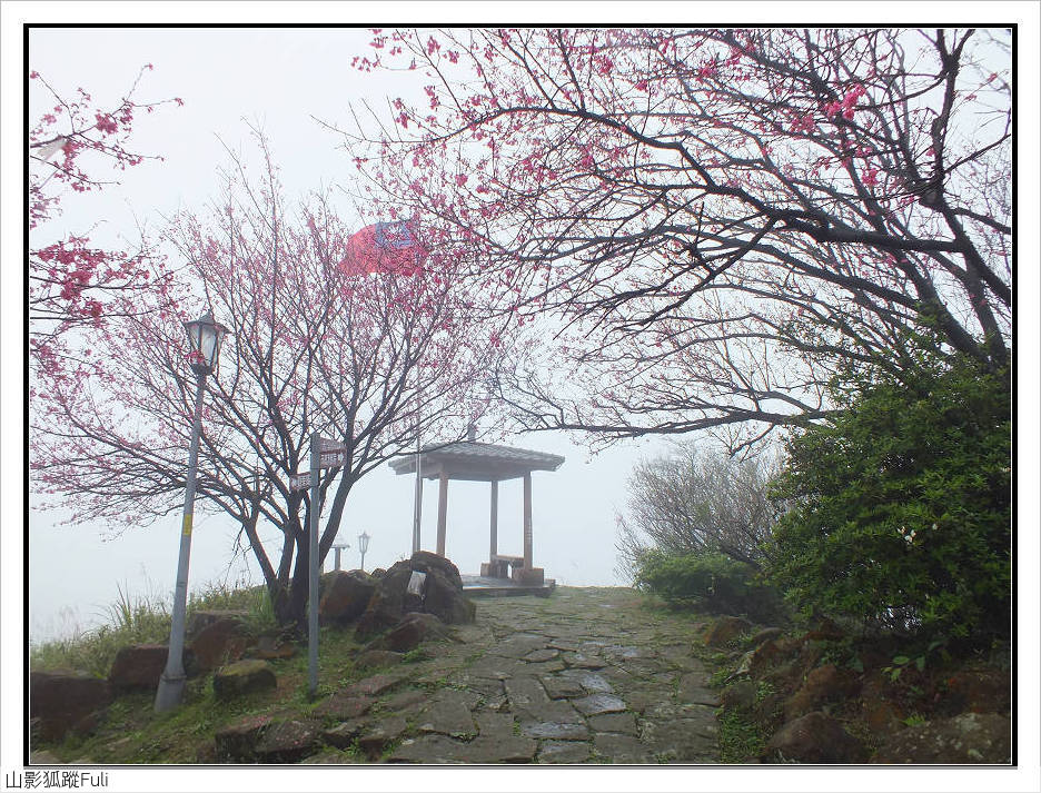 山霧山櫻:山霧櫻花 (2).jpg