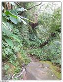 五指山登山步道:五指山登山步道 (59).jpg