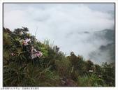 巨齒稜紅星杜鵑花:巨齒稜紅星杜鵑 (74).jpg