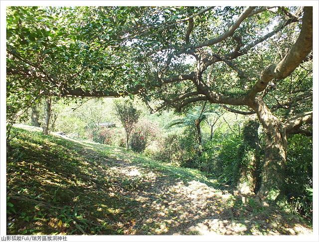 猴洞神社 (37).JPG - 猴洞神社鐘萼木