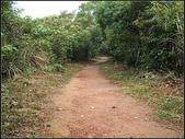 羊稠坑森林步道:羊稠坑步道 (16).jpg