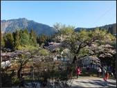 阿里山森林步道:阿里山步道 (8).jpg