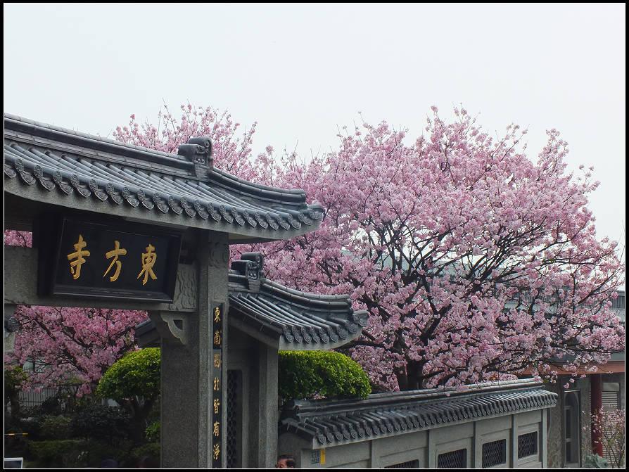 東方寺吉野櫻:東方寺 (1).jpg