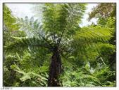 棲蘭森林遊樂區:棲蘭森林遊樂區 (49).jpg