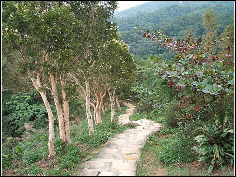 象山自然步道、奉天宮步道:象山步道 (24).jpg