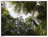 棲蘭森林遊樂區:棲蘭森林遊樂區 (47).jpg