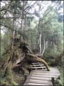 太平山莊、鐵杉林步道、原始森林步道:鐵杉林步道 (12).png