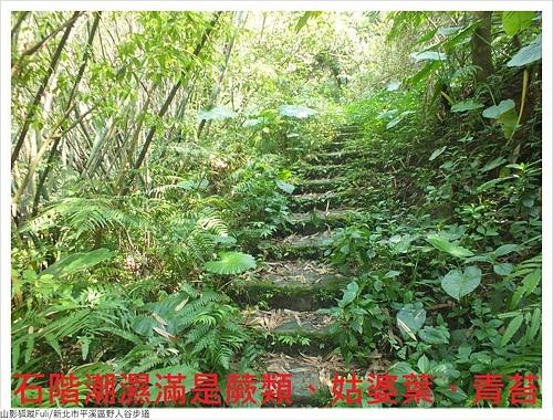 野人谷步道 (7).JPG - 野人谷步道
