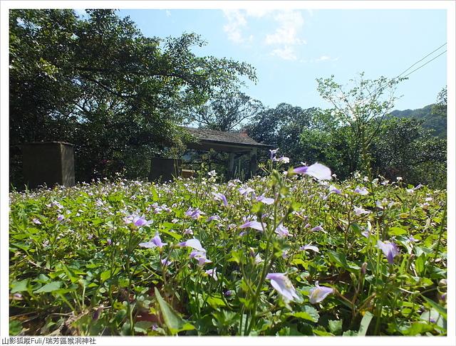 猴洞神社 (2).JPG - 猴洞神社鐘萼木