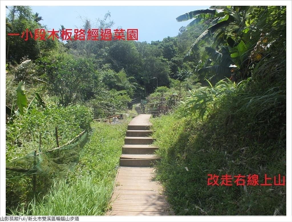 蝙蝠山步道 (6).JPG - 蝙蝠山步道