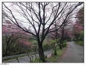 山霧山櫻:山霧櫻花 (39).jpg