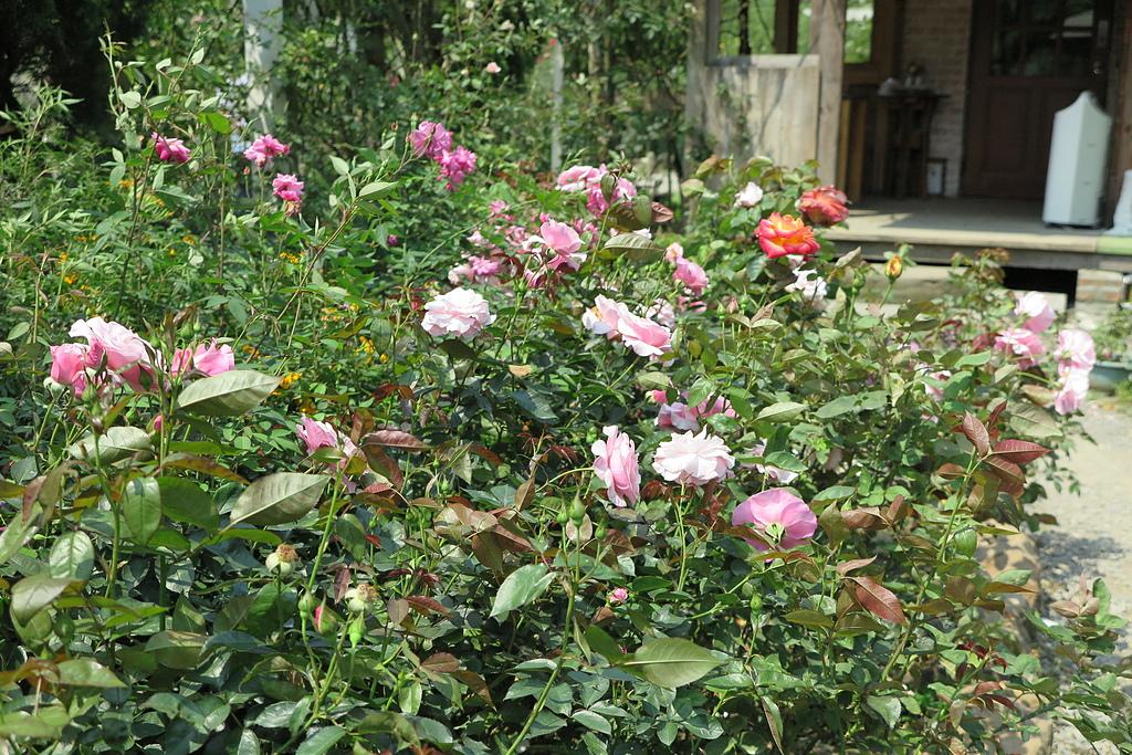 11.JPG - 大溪玫瑰山谷