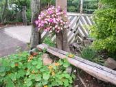 溪海花卉2'花與香草農場:13.JPG